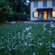 Well kept lawn with small flowers and a pretty, termite-free home in the distance with the lights on.